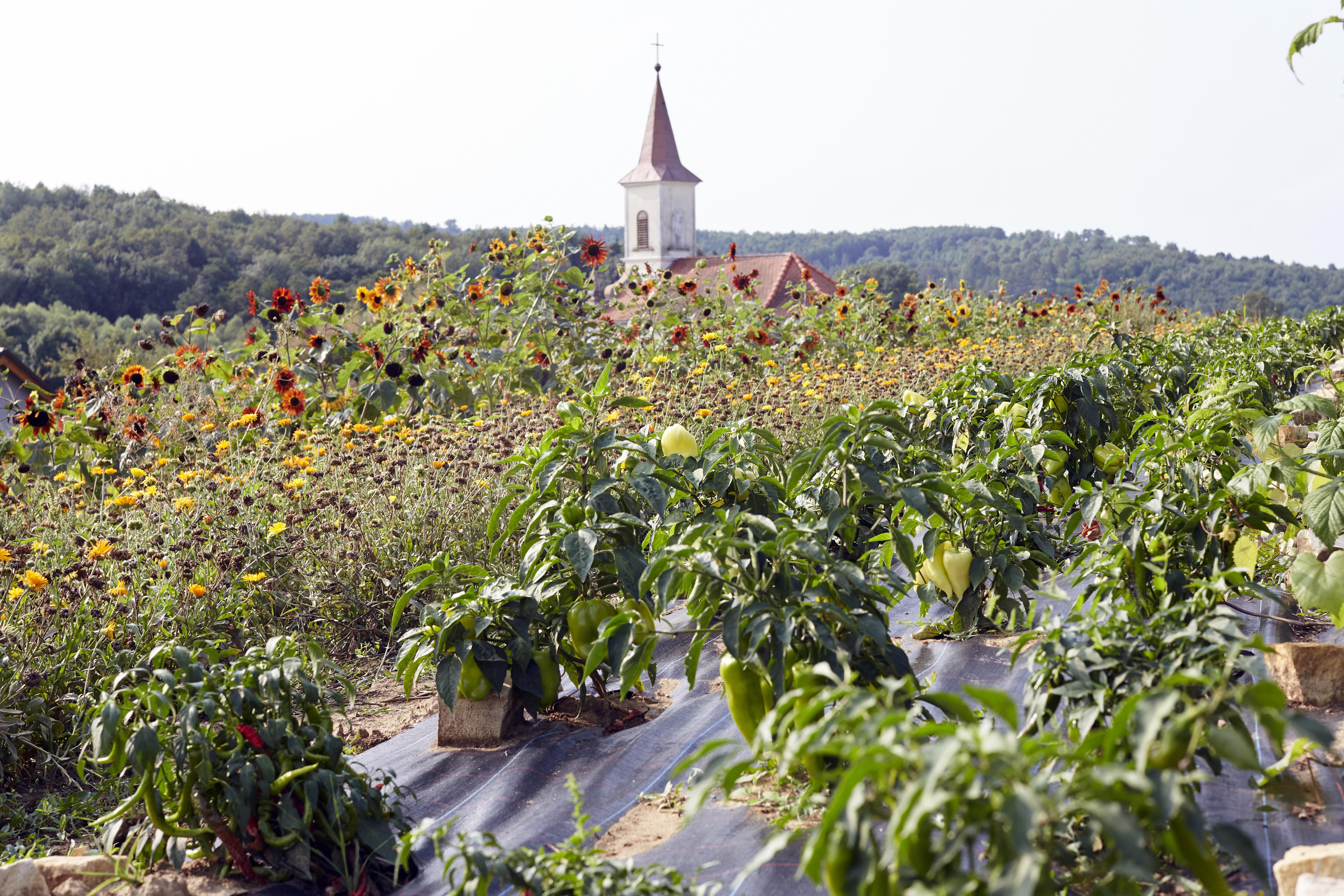 Biohof Grüner Baum Kirche